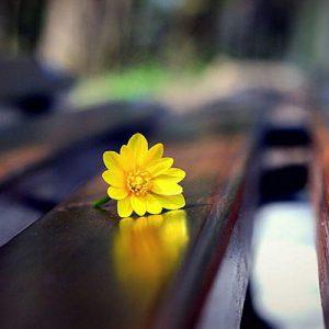 موسیقی بی کلام بسیار زیبای ونجلیس بنام فتح بهشت